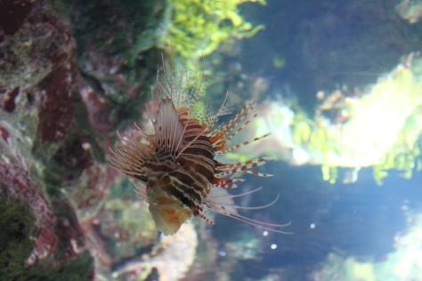 Aquarium, La Rochelle