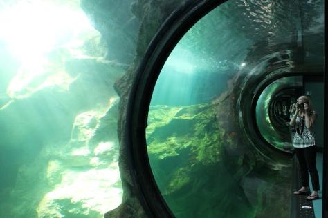 Shark Tank, La Rochelle Aquarium