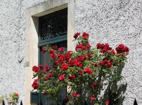 Les Roses de Coulon