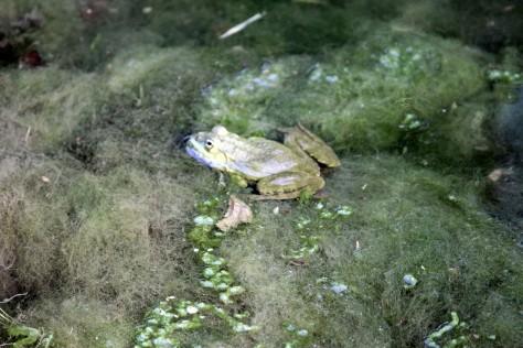 Frog Enhanced