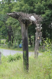 Eagle's Roost Tree Cropped