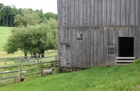 Sheep Barn Enhanced and Cropped
