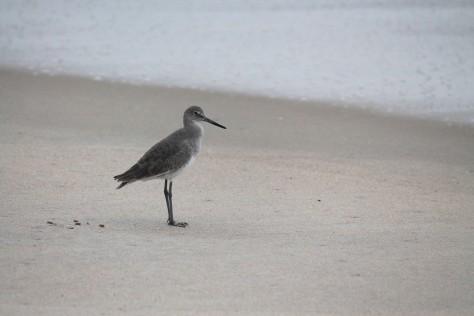 Beach-walker