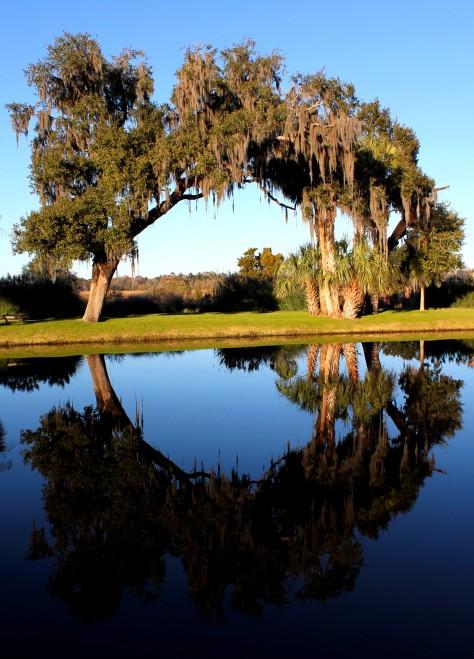 Circle Trees Middleton Place