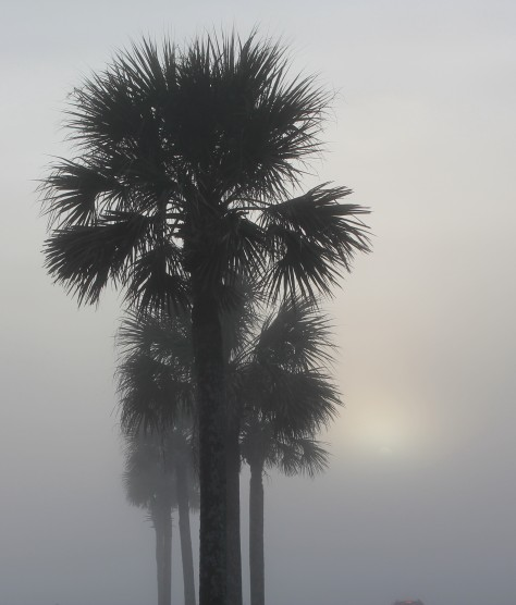 Palms in the Fog Vertical