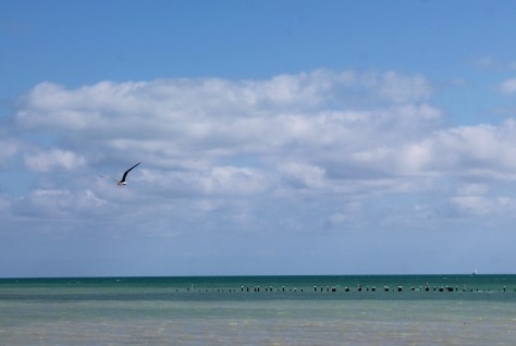 Sea, Sky and Seagull