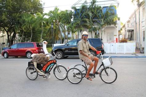 Standard Duval Street style sight