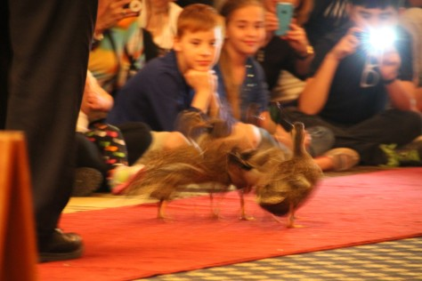 Peabody Ducks on Red Carpet