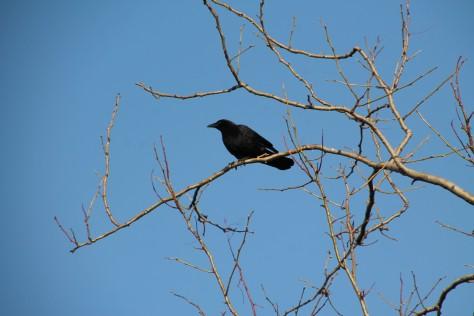 Bird Neighbor