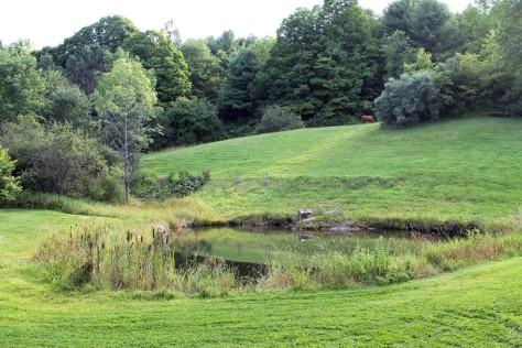 Four-Legged Farm, Putney, Vermont