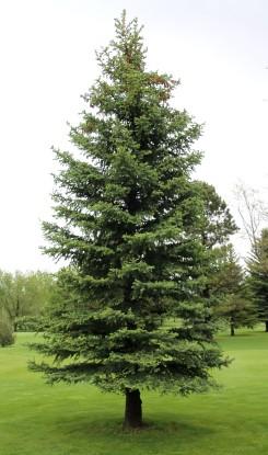 Happy Tree 3