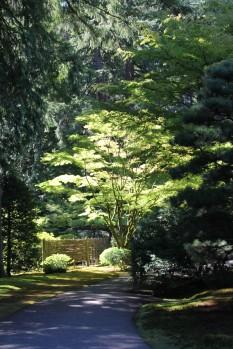 Japanese Gardens -- Portland 2