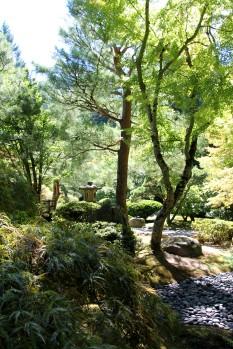 Japanese Gardens -- Portland 3