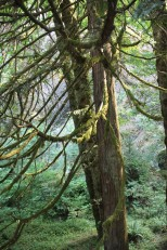 Tree at Multnomah Falls Oregon